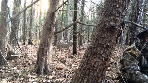 Bobcat stalks youth while turkey hunting April 5, 2014