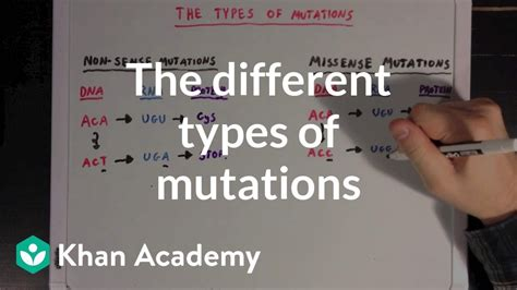 The different types of mutations | Biomolecules | MCAT